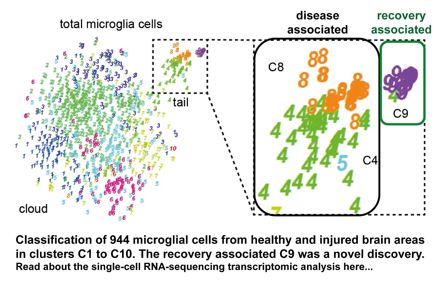 Unique microglia recovery             population revealed by single-cell RNAseq following neurodegeneration.